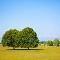 bomen bij Warffum