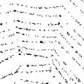 onweersbeestjes, oftewel knuut