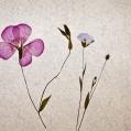 Stilleven met droogbloemen