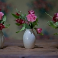 Stilleven met roosjes